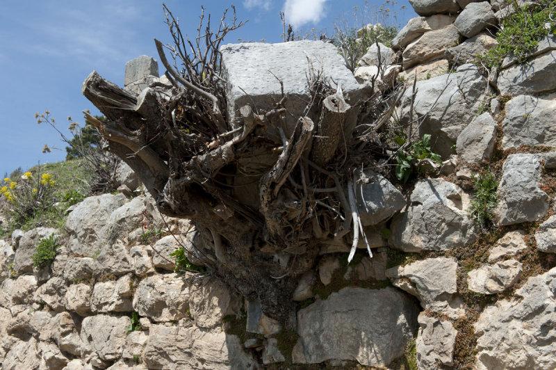 Arykanda march 2012 4962.jpg