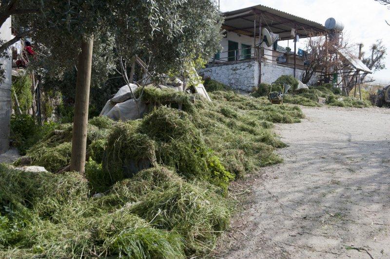 Limyra march 2012 5121.jpg