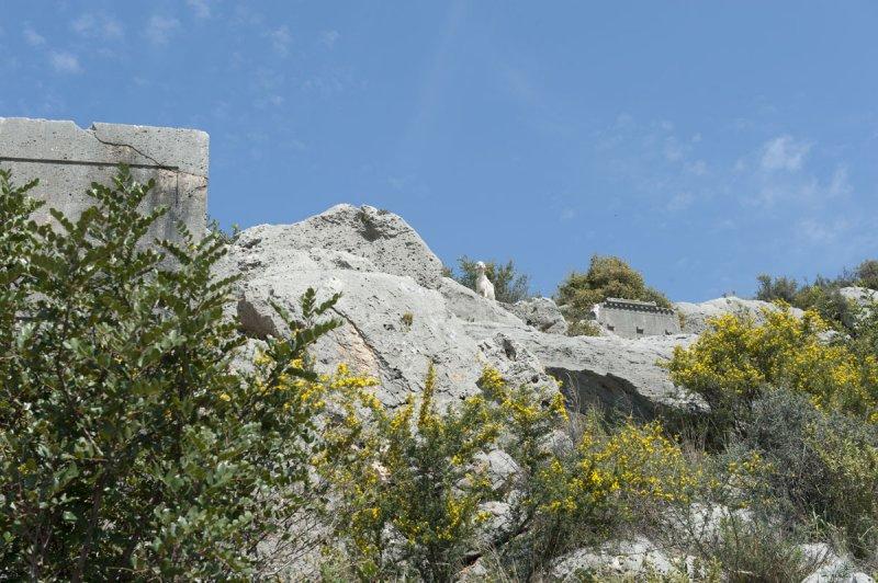 Limyra march 2012 5141.jpg