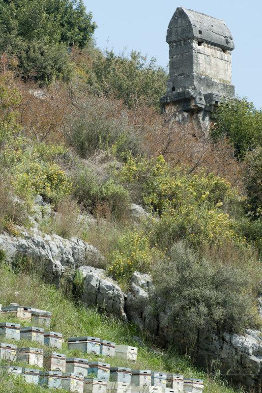 Limyra march 2012 5158.jpg