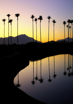 Palms, Coachella Valley