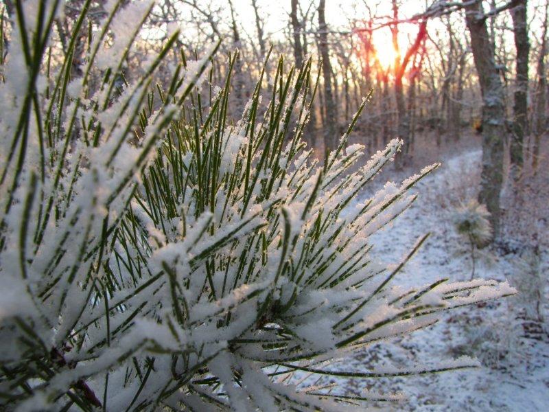 Snowy Needles.jpg