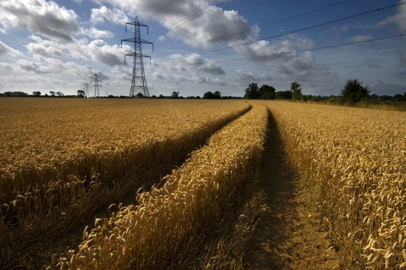 Wheat fields Aug 2012 01 copy.jpg