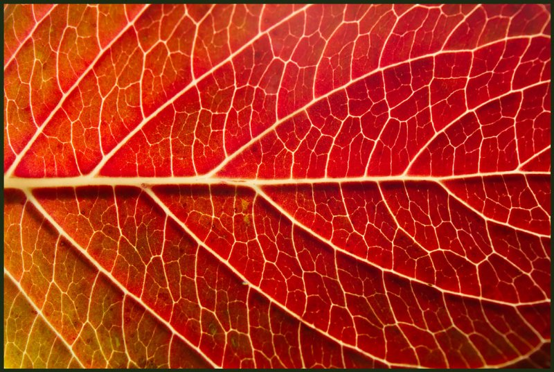 A leaf in my garden - the tree of life...