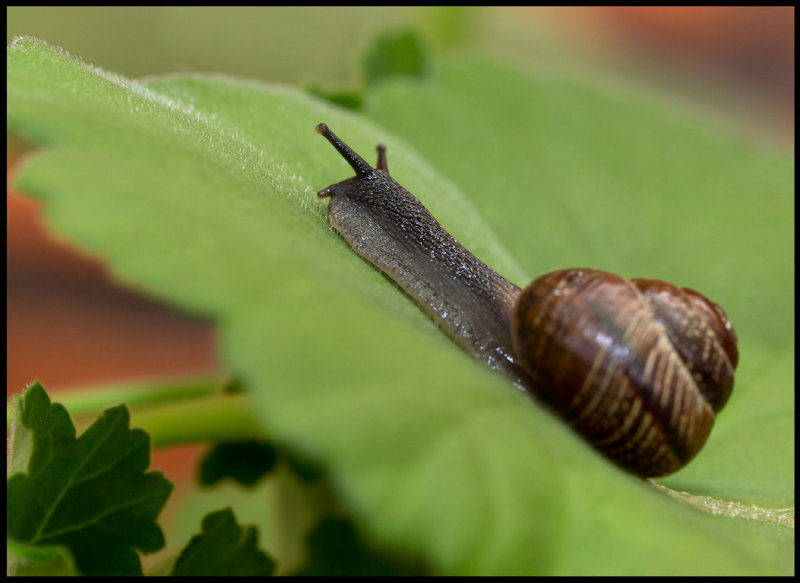 What comes after this steep hill? Snail in my garden at home