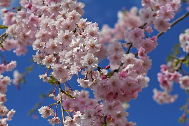 IMG_3743 Pink