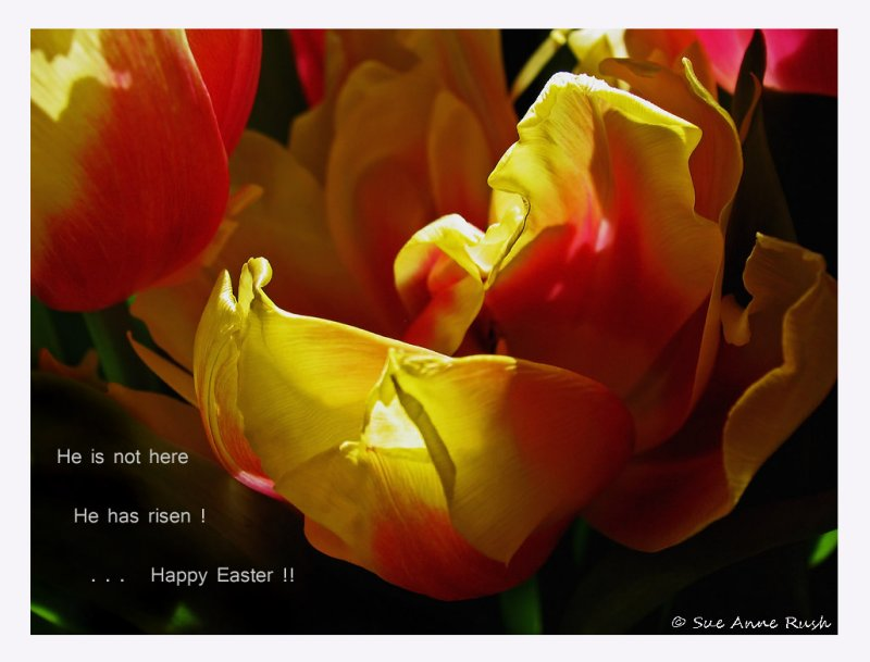 IMG_3887  Happy Easter to my friends ...