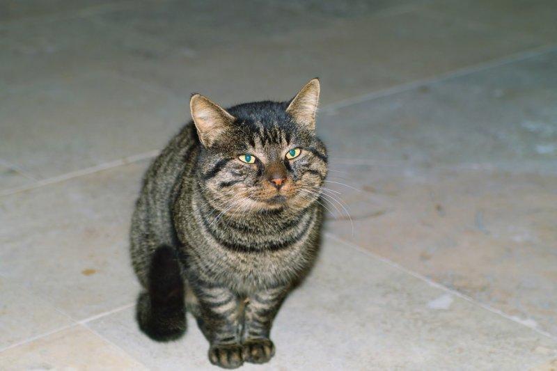 bad_cat.jpg