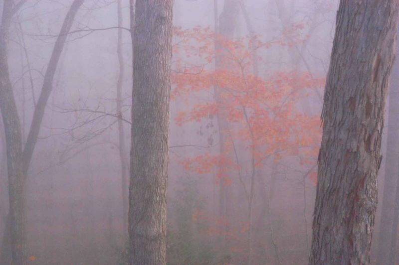 Winter fog 0712