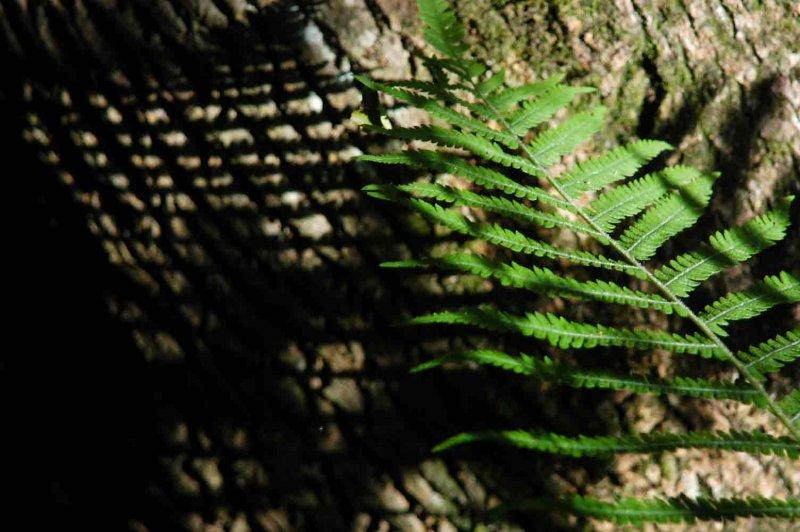 Woodland shadows 5164