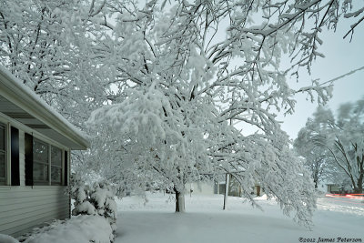 Snow (20418)