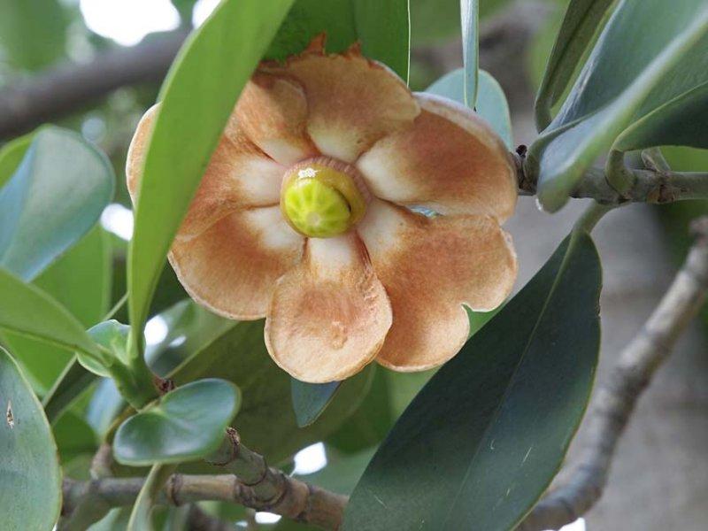 Flower 3100596