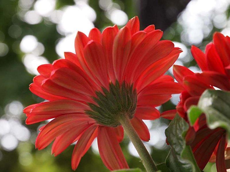Flower 5292497