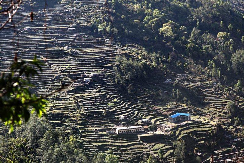 Reisterrassen in Nepal  /  Rice terraces in Nepal
