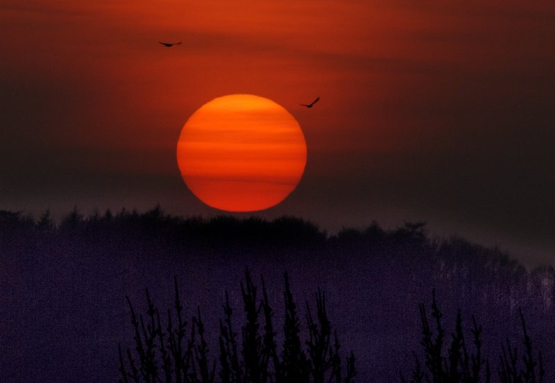 sunset with crows