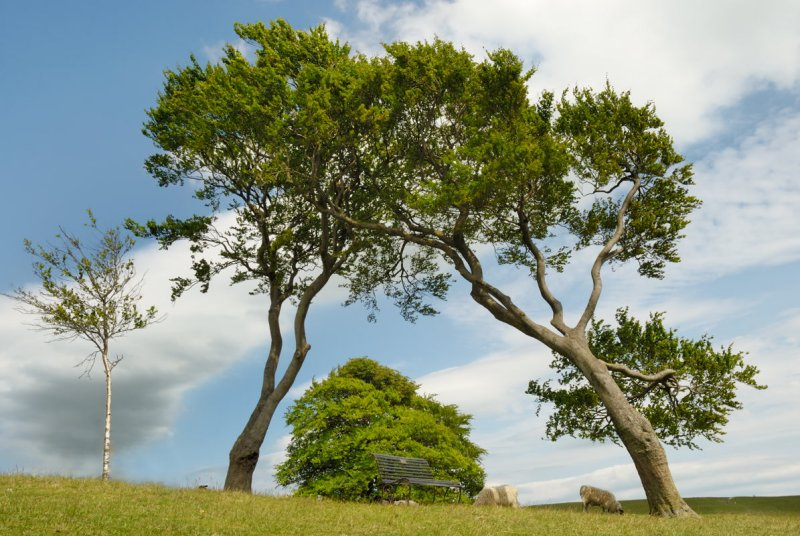 trees on Cleeve Common