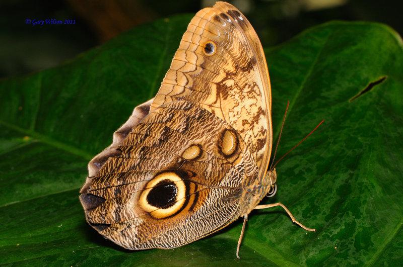 Owl/Butterfly House, Missouri