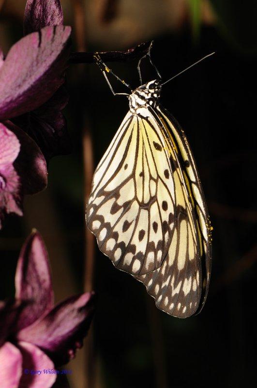 Paper Kite Butterfly House, Missouri