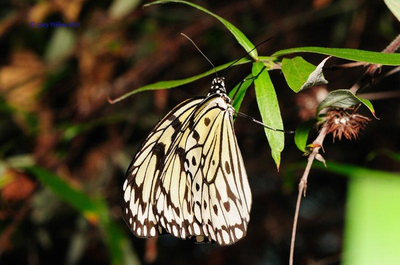 Paper Kite/Butterfly House, Missouri