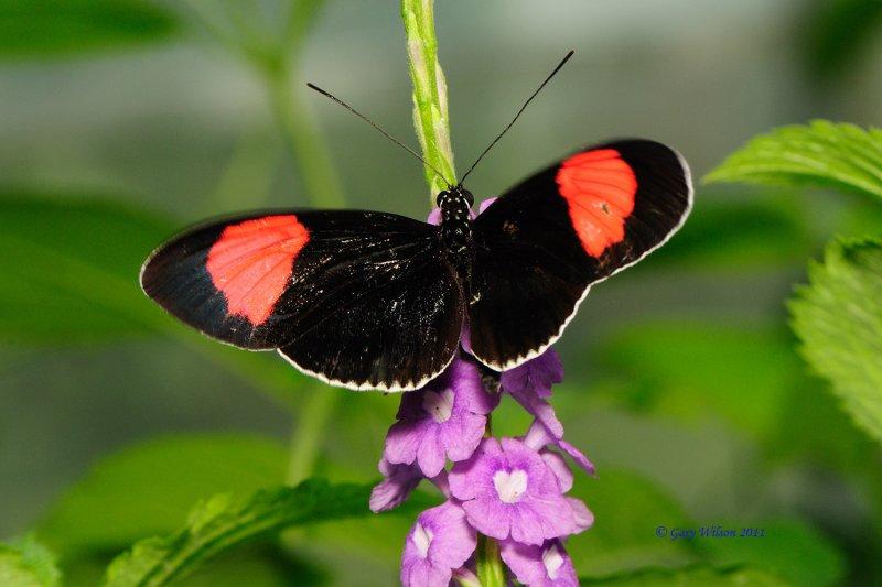 D30_4700.jpg/Butterfly House, Missouri
