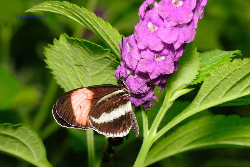 D30_4701.jpg/Butterfly House, Missouri