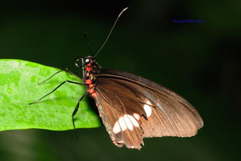 D30_4711.jpg/Butterfly House, Missouri