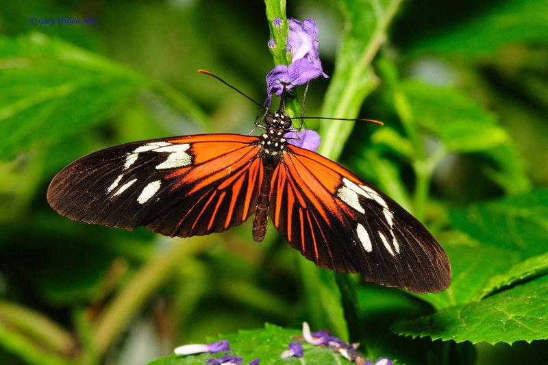 Small Postman/Butterfly House, Missouri