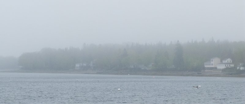 Foggy Bay with Cormorant in Boat