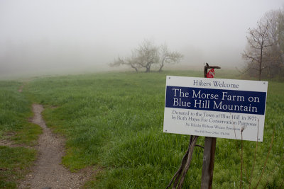 Foggy Day on Blue Hill Mountain #1