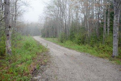 Foggy Logging Road