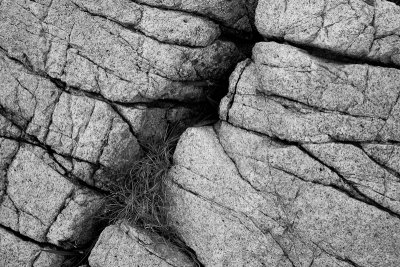 Cracked Rock and Grass