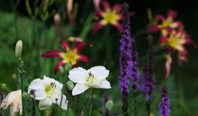 White Lily Pair by Red Lilies and Liatris