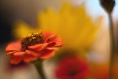 Wildflower Bouquet Closeup #2