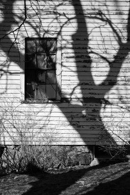 Tree Shadow on Black House barn