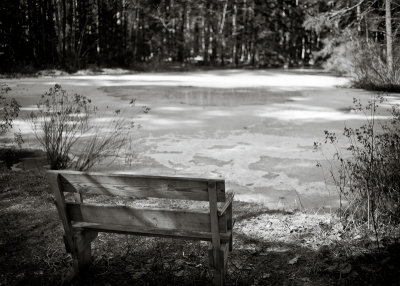 Bench Facing Frozen Pond