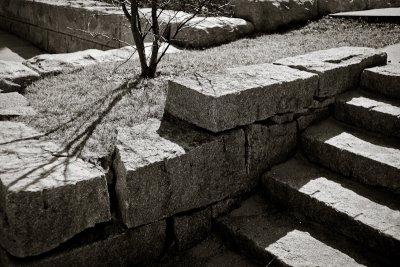 Stone Steps and Tree