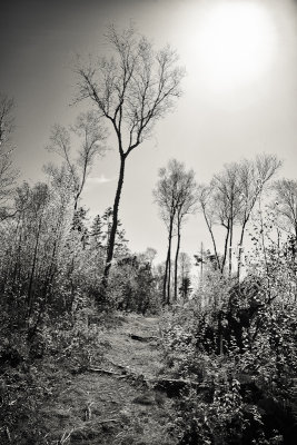 Witherle Woods Path #1