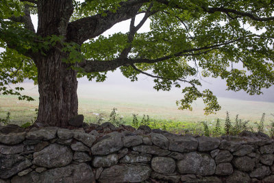 Tree and Stone Wall by Black House Lawn