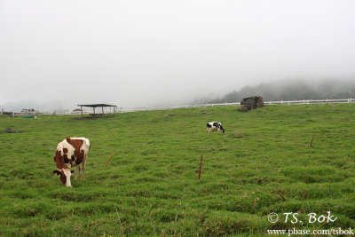Dairy farm in Kundasang.jpg
