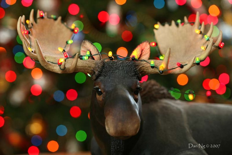 Another Merry Chris-Moose to You!