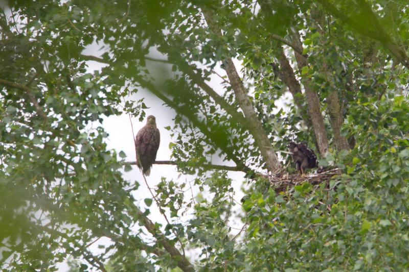 1-06-2012 zeearend bos.jpg