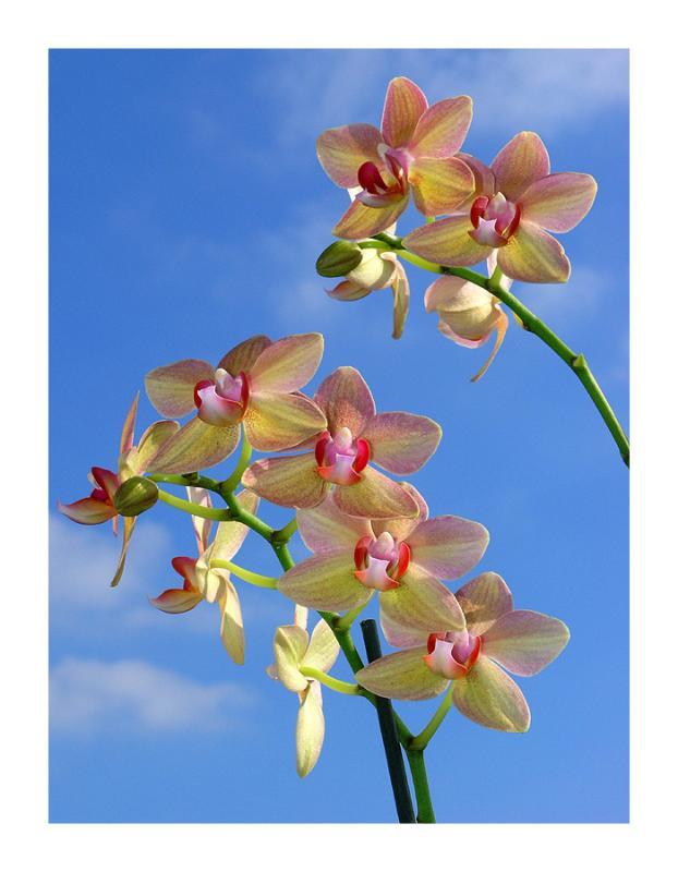 Orchids in Paris sky