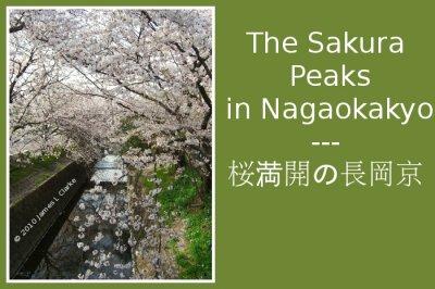 The Sakura Peaks in Nagaokakyo