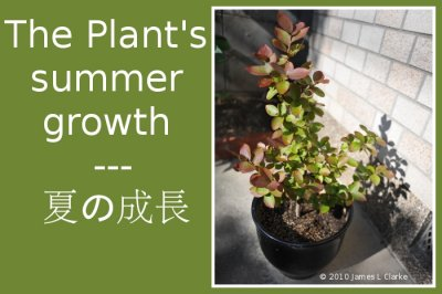 The Plant's summer growth