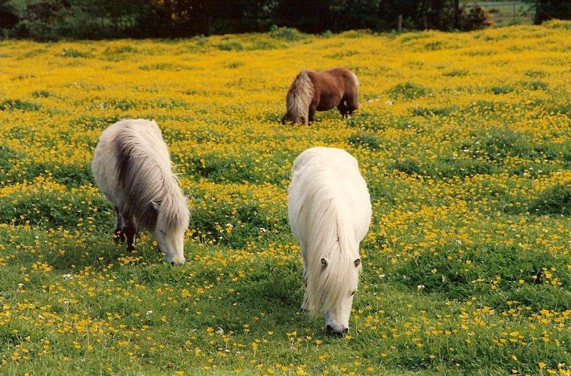 pony paradise