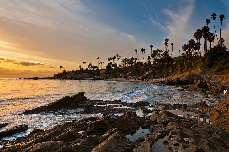 Palm trees, Laguna beach (1604)