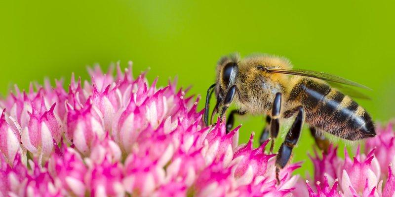 Bee industrious!