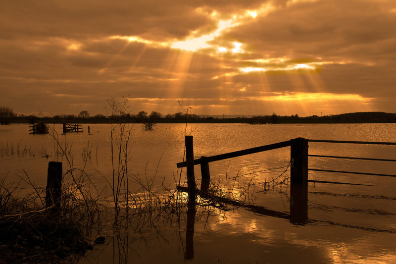 Floods of gold on the Levels, Somerset