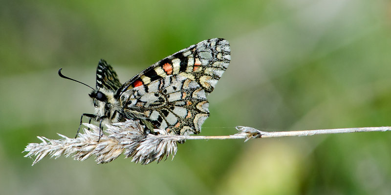 Multi-coloured butterfly