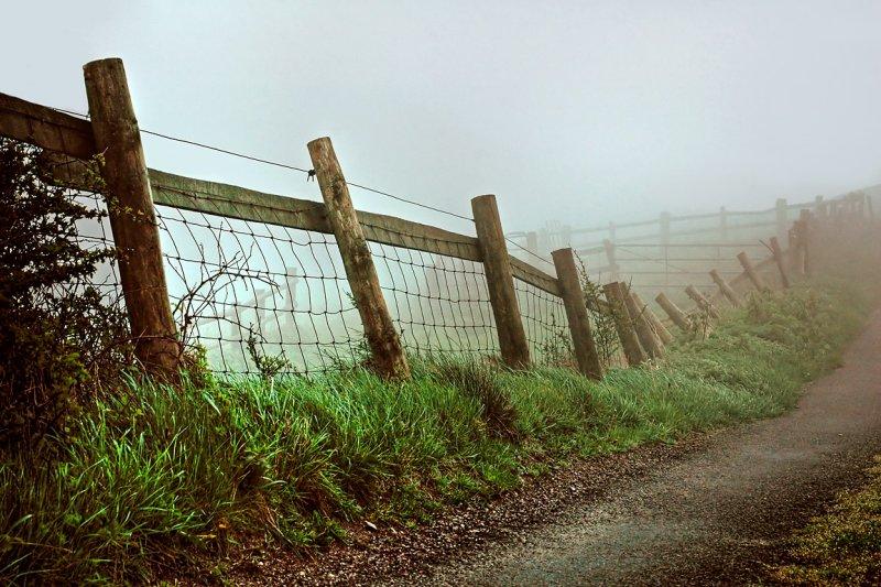 Fence in the fog, Eggardon Hill
